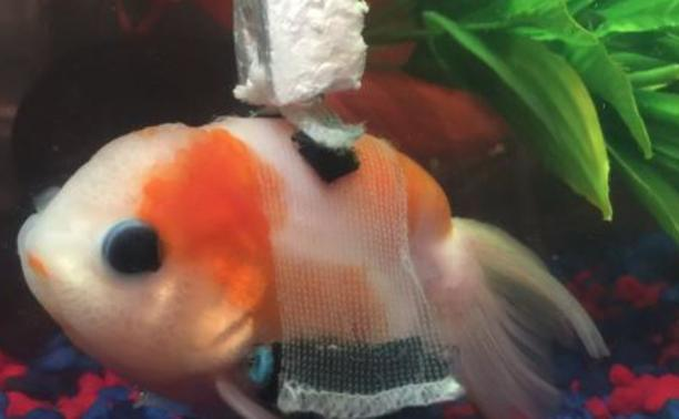 Actualit s nautisme il tait une fois un poisson rouge for Petit poisson rouge