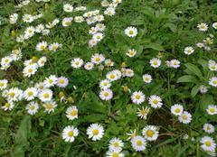 Climat Ain Beida Fleurs du printemps