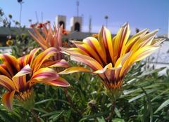 Le printemps sur Alger