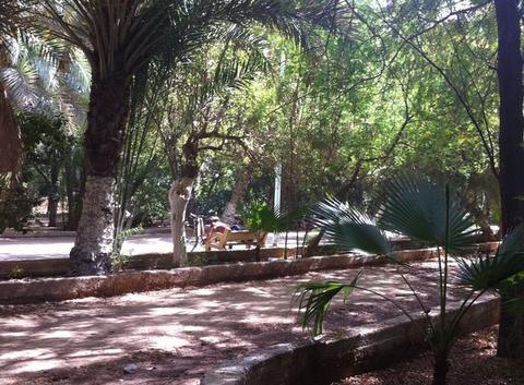 La palmerais