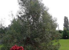 Ciel Casorezzo 20010 Tramonto