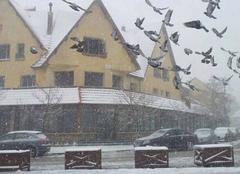 Neige Al Machouar-Stinia L'hiver: