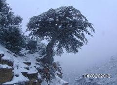 Neige Oued El Ma Ouedelma/saadou hassen