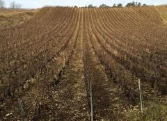 Ciel Les Riceys 10340 Journée aux vignes