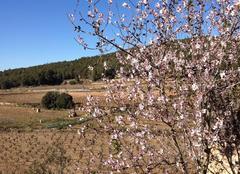 Faune/Flore Avinyonet del Penedès 08793 Le printemps est arrivé