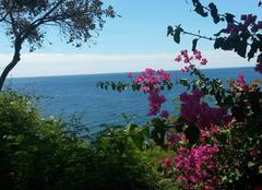 Faune/Flore Funchal Mai à madère