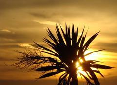 Ciel Capaccio 84047 Ou le pouvoir subjuguant de la lumière sur une simple branche...