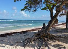Mer Le Moule 97160 Magnifique plage