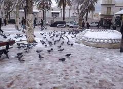 La neige a Tlemcen
