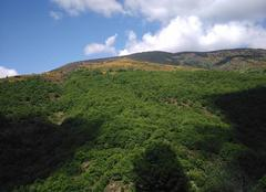 Les genêts en fleurs sur la montagne du Bougès