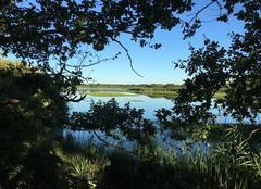 Étang des Riaux