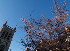 Climat Cambridge Arbre en fleurs en décembre
