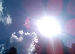 P�tales de soleil