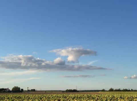 Petit nuage en champignon