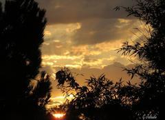 Lever de soleil en Touraine