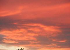 Coucher  du  soleil...hier  soir...ce  matin   du   mistral....