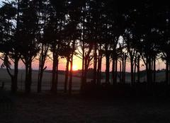 Coucher de soleil derrière les pins