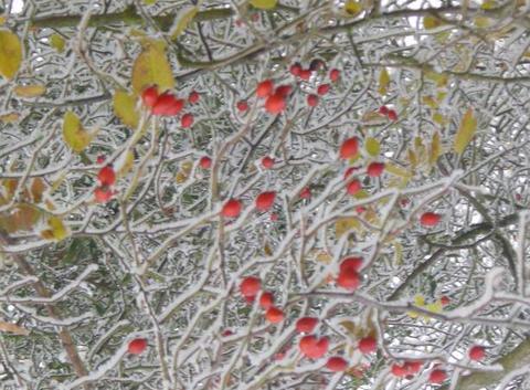 Frozen bush