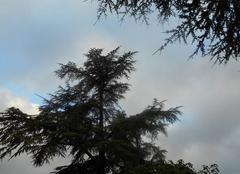 Hier  soir ..orage  67mm...ce  matin  nuages  et  ciel bleu....