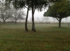 Brume ...l'automne est bien là !