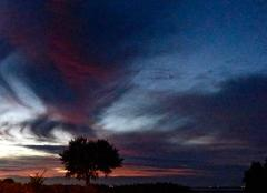 Grand ciel,petit arbre