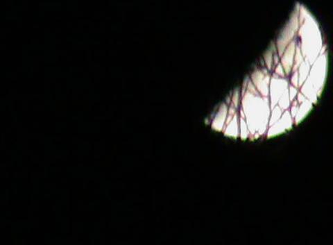Mme la Lune entre les branches