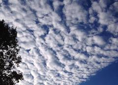 Alto cumulus?