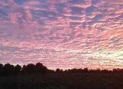 Ciel de feu depuis les vignes