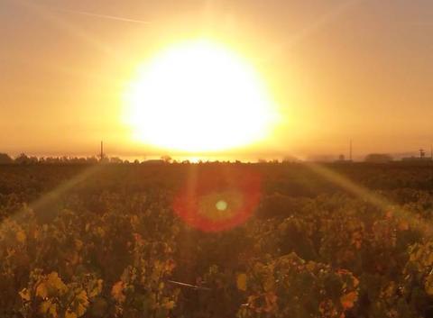 Lever de soleil entre estuaire de la Gironde et vignes