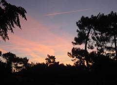 Ciel rose ce matin sur la forêt....