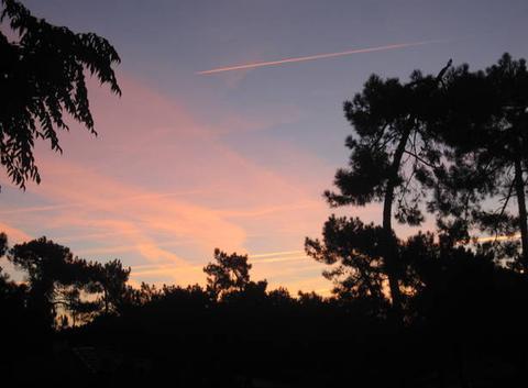 Ciel rose ce matin sur la for�t....