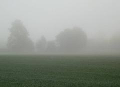 Brouillard épais