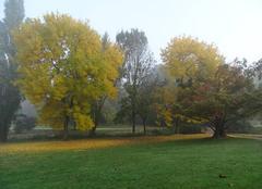 Brouillard sur nantes ce matin