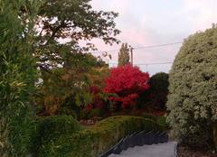 Couleurs d'automne 8h ce matin