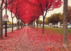 Couleur rouge en automne