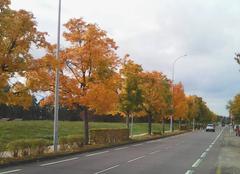 Image d'automne