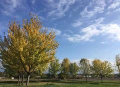 Couleurs d'automne sous le soleil  - 15h36