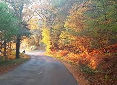 Belle automne