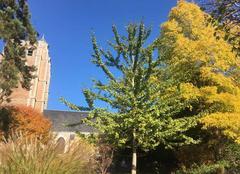 Le jardin Public et l Eglise