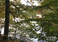 Paix sur l'étang