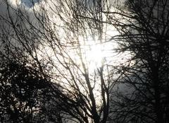Le soleil joue dans les branches