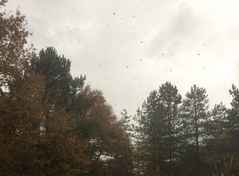 Grosse averse avec envolée de feuille