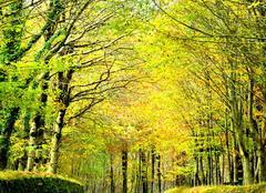 Les feuilles d'automne...