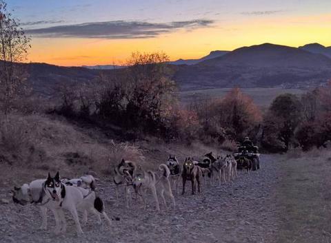 Entraînement des chiens avec un jolie coucher de soleil