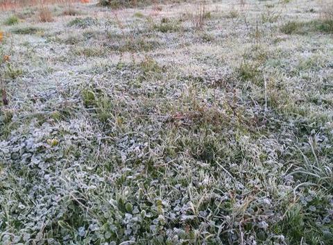 Gelées blanches sur le Gard à Mus.