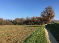 Grand soleil sur campagne moursoise aux couleurs d'automne  ce matin