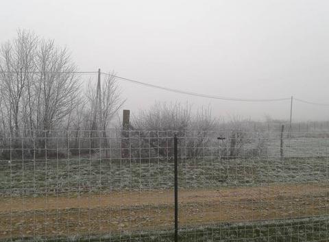 Brouillard givrant à Saint Cyr de Favifères