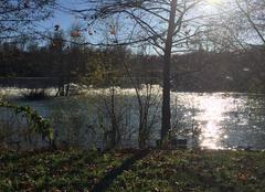 Faune/Flore Brienne-la-Vieille 10500 La rivière