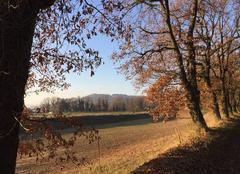 Couleurs d'automne sous le soleil cet après-midi