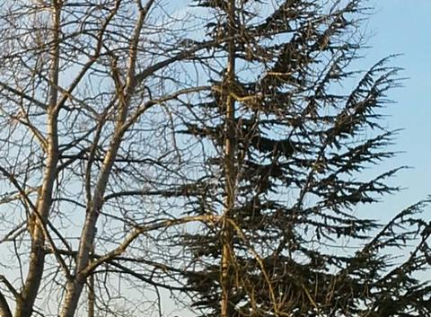 Ciel bleu de décembre